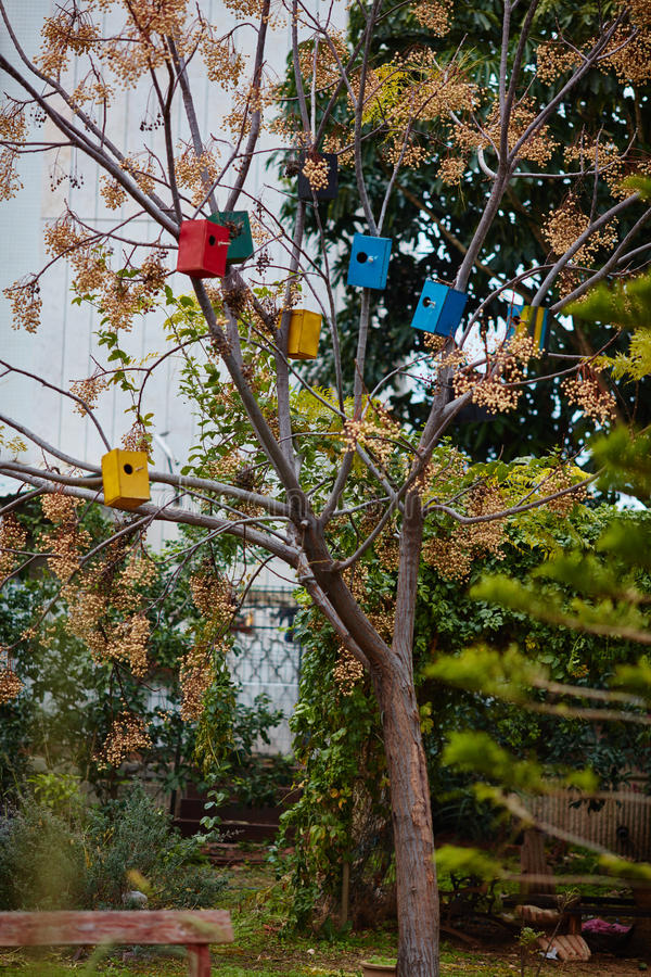 Bird houses on the trees royalty free stock images