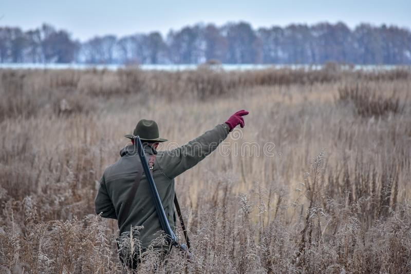 The bird hunter walks across the field with his dog on a partridge hunt and shows her where to go stock photography
