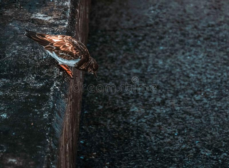 Bird hunting insects royalty free stock photography