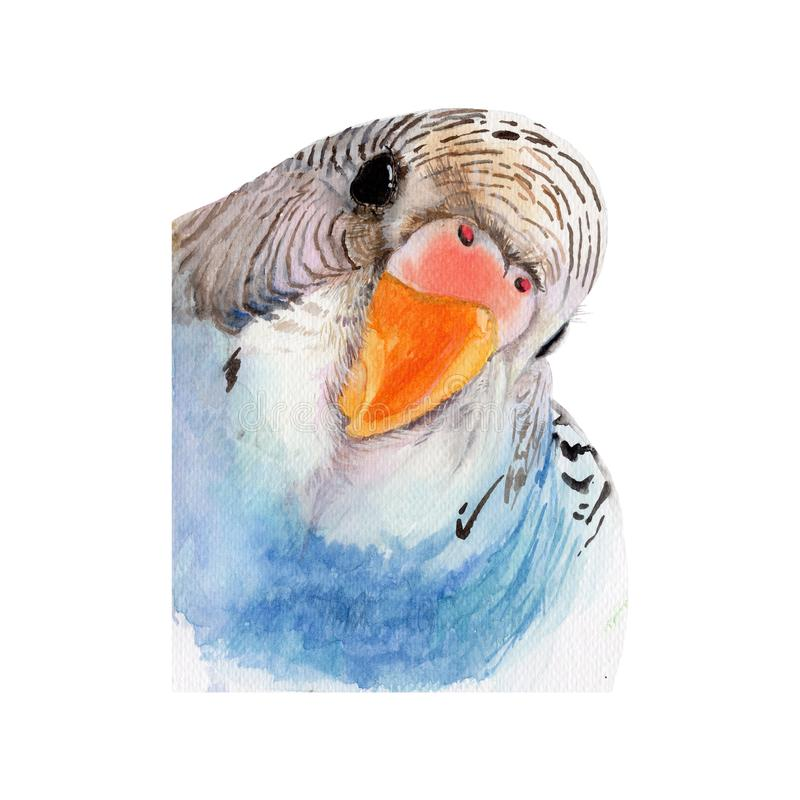 Bird illustration watercolor painting.Watercolor hand painted botanical. illustration of a bird isolated on white background royalty free illustration