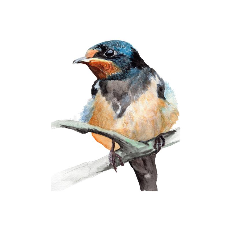 Bird illustration watercolor painting.Watercolor hand painted.illustration of a Bird isolated. Bird illustration watercolor painting.Watercolor hand painted stock images