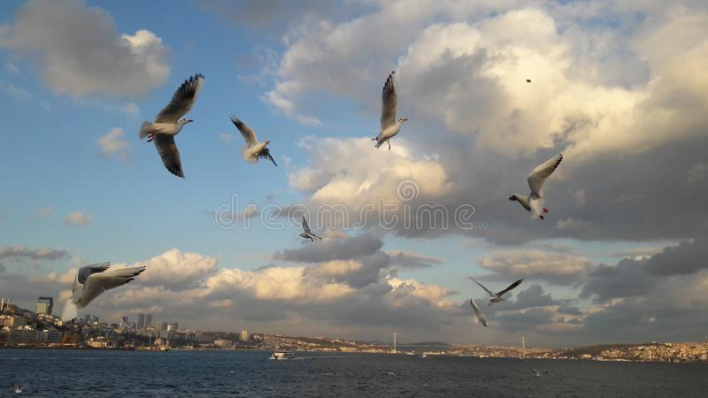 Bird istambul river sofhia old city royalty free stock photography