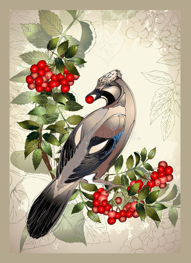 Bird a jay on a mountain ash branch. stock illustration