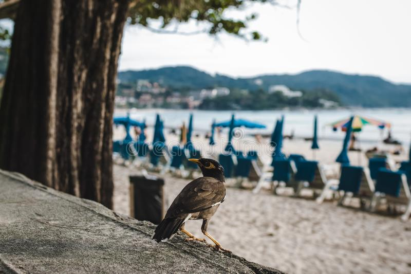 Bird at Kata Beach at Sunset in Phuket Island, Thailand stock images