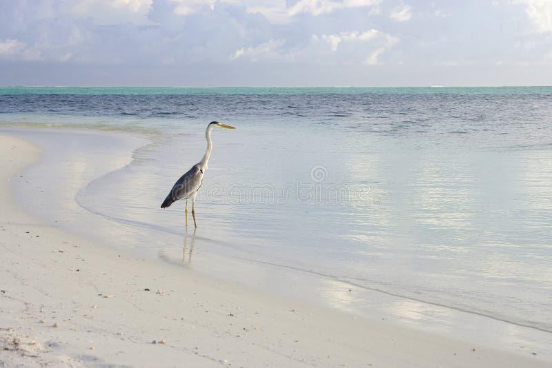 Bird in Lagoon stock images