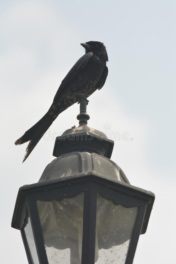 A bird on a lamp stock image