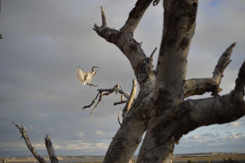 Bird landing in tree royalty free stock photography