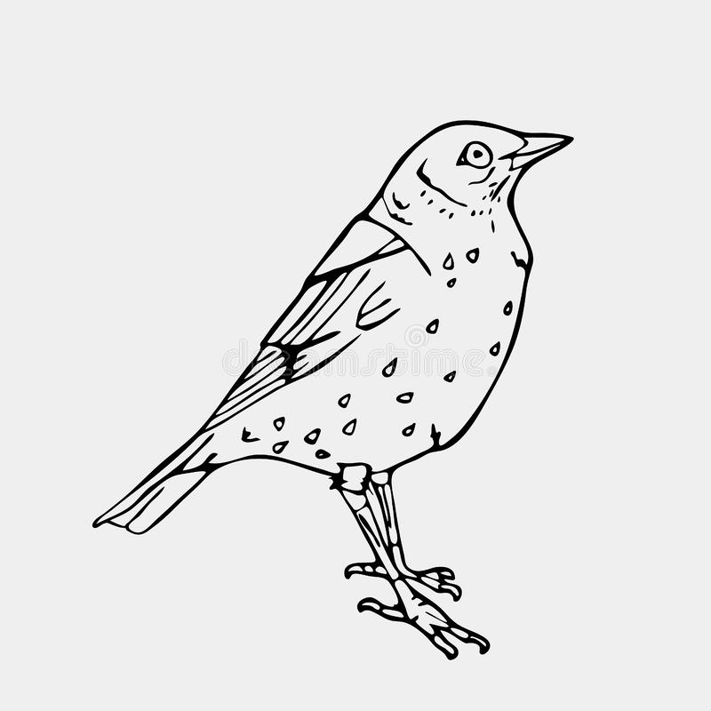 Hand-drawn pencil graphics, small bird. Engraving, stencil style. Bird, lark, oriole, chickadee, sparrow, blackbird, nightingale, finch, bunting, hangbird stock illustration