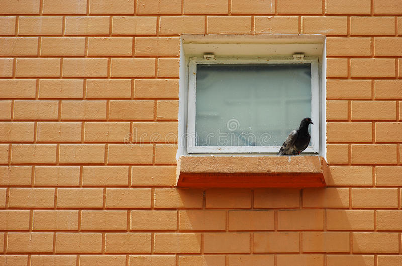 Bird On The Ledge royalty free stock photography