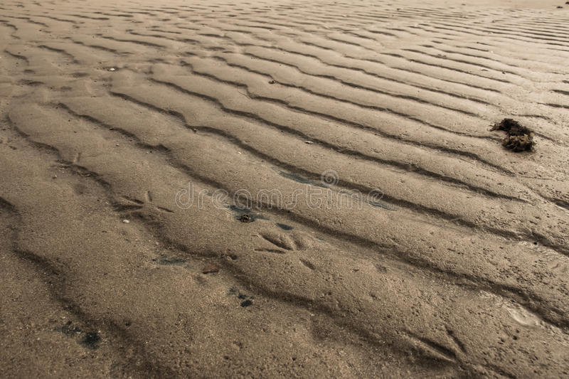 Bird line on sand royalty free stock photo