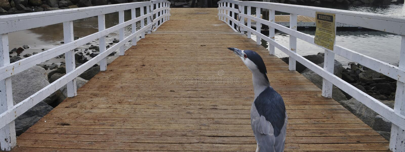 A bird looking onto the foreground royalty free stock images