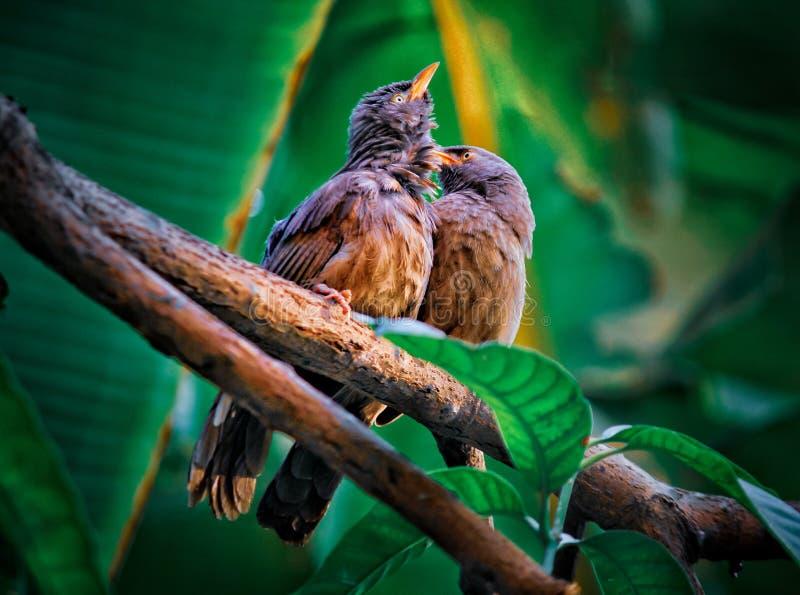 Bird love. A pair of loving birds walpaper stock photos