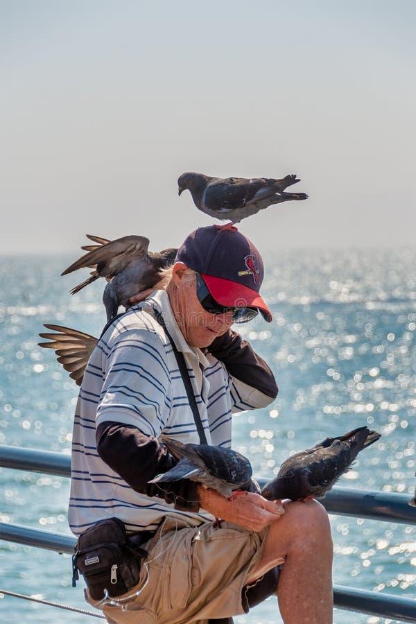 Bird Lover Feeding Birds stock photo