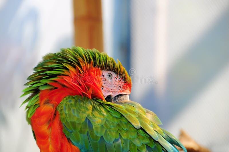 Download Bird, Macaw stock photo. Image of bill, animal, beautiful - 24345774