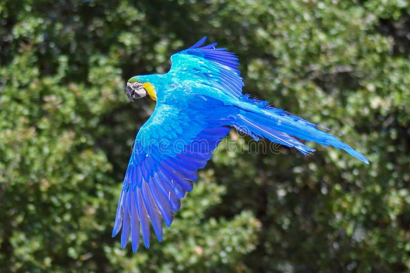 Bird, Macaw, Parrot, Beak stock images