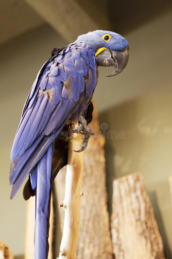 Bird, Macaw, Parrot, Beak stock photos