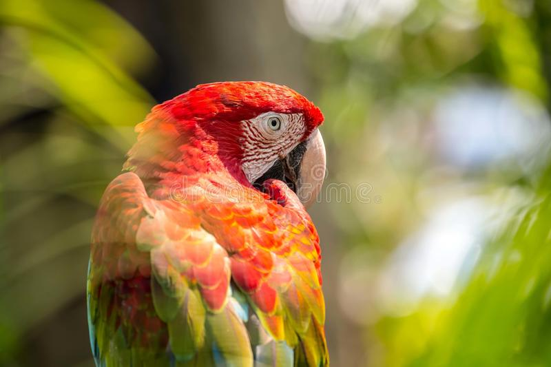 Bird macaw. Macaw sitting on branch in open Zoo of Thailand royalty free stock image