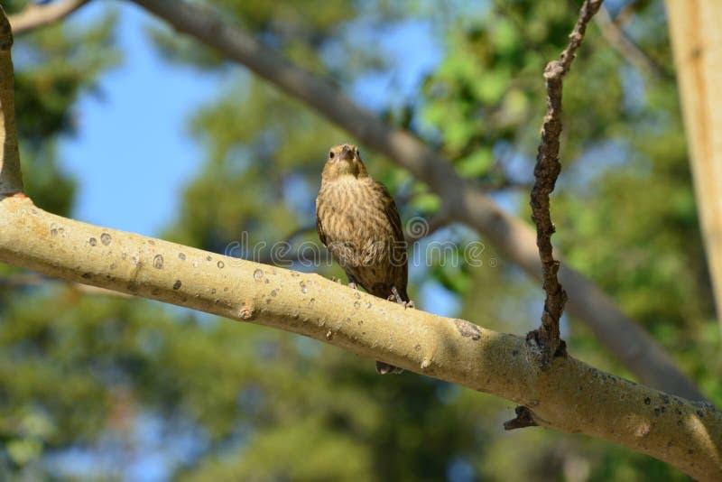 Bird at Minnewanka Lake canada. Bird in a tree Minnewanka Lake Canada stock photo