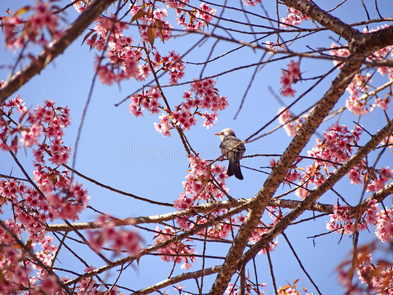 Bird in nature with beautiful blossom royalty free stock photography