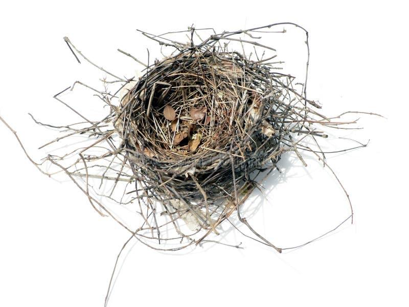 Bird nest 08' stock photo