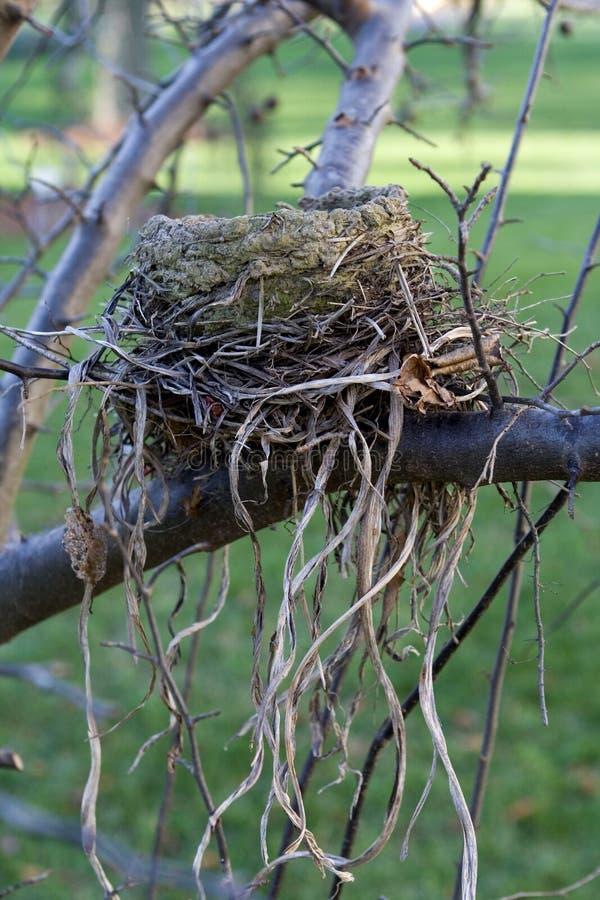Bird Nest stock photo