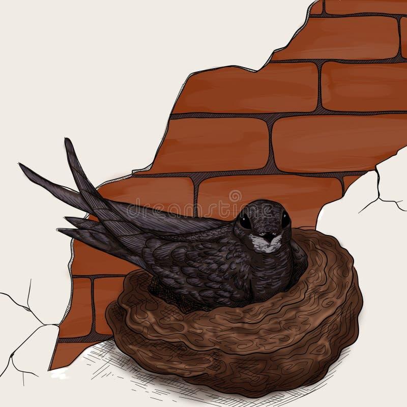 Download Bird on the nest stock illustration. Image of brick, birds - 26719150