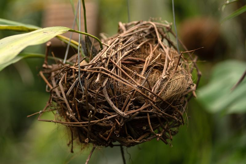 Bird nest composition in background of plants royalty free stock photos