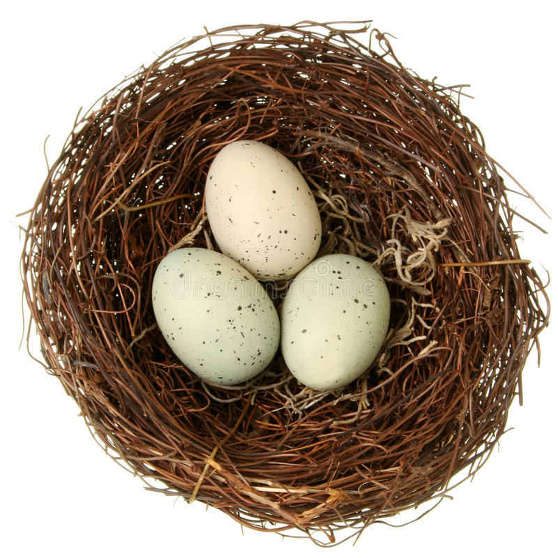 Bird nest eco-friendly concept royalty free stock photo