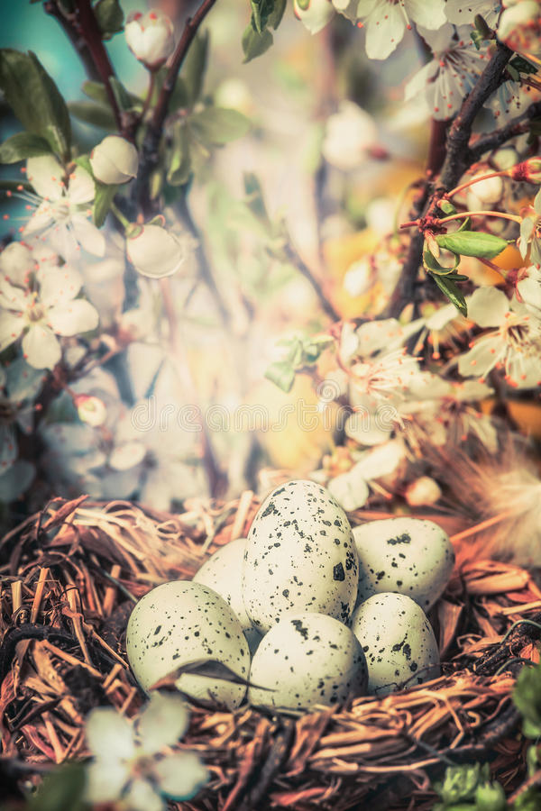 Bird nest with egg in bush with springtime blossom, close up, bokeh. Easter greeting card. Spring outdoor nature royalty free stock images