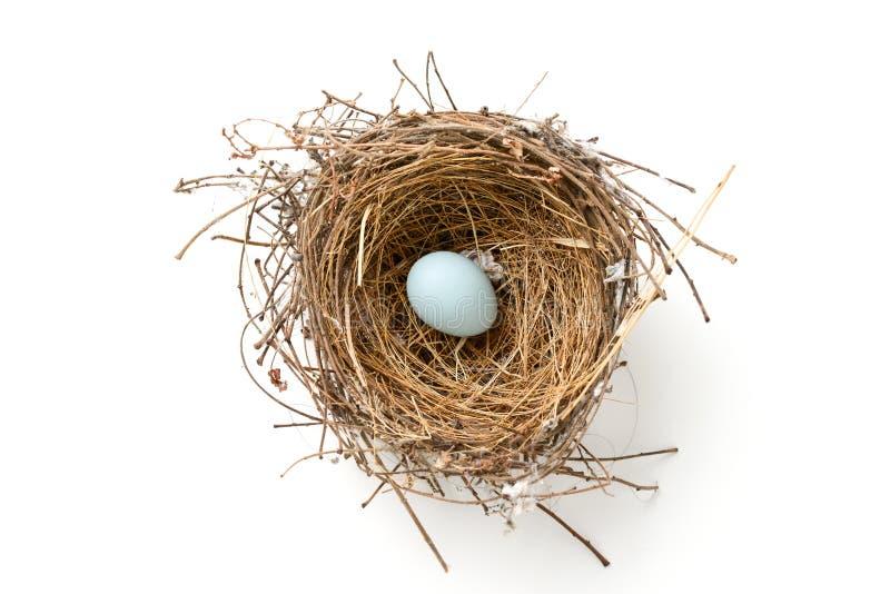 Bird nest royalty free stock photo