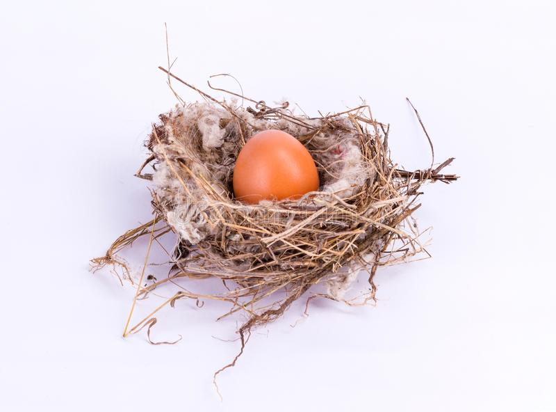 Bird nest with egg isolated on white background royalty free stock photography