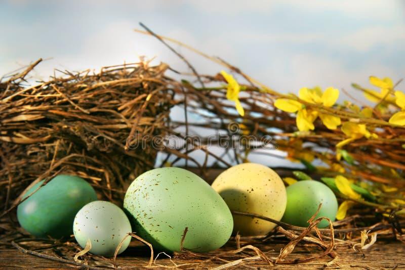 Bird nest and eggs royalty free stock photo