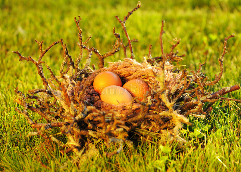Download Bird nest with eggs stock photo. Image of straw, food - 26947340