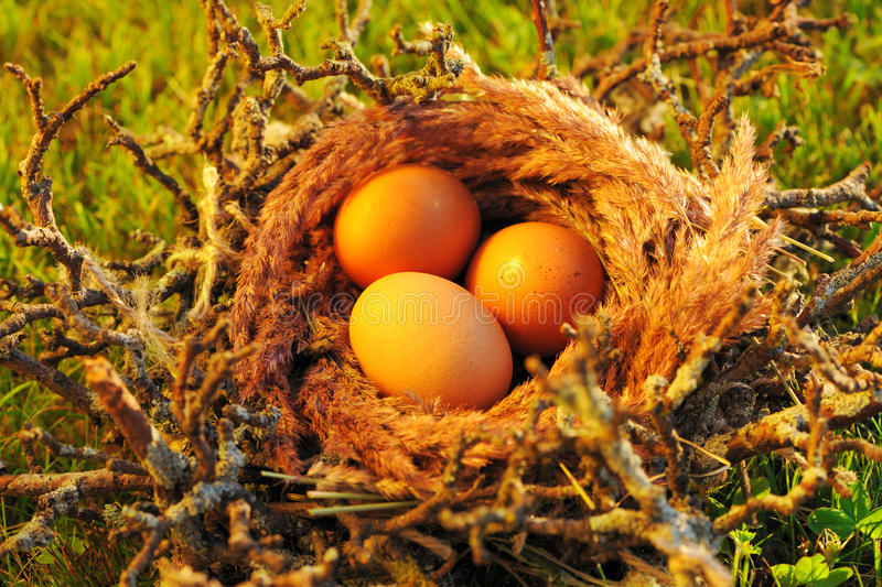 Download Bird nest with eggs stock photo. Image of spring, chicken - 26947378