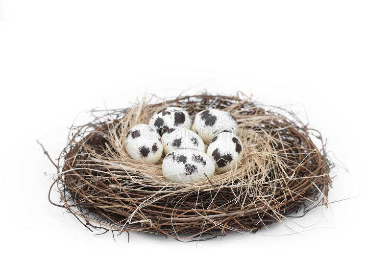 Bird nest with a group of 6 natural spotted eggs stock photography