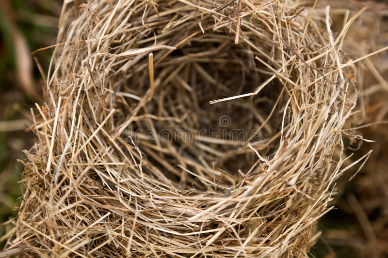 Download Bird nest in nature stock image. Image of away, absence - 4978925