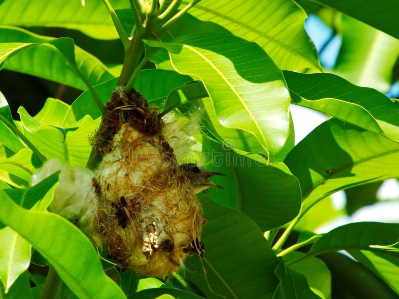 Bird nest in the nest royalty free stock images