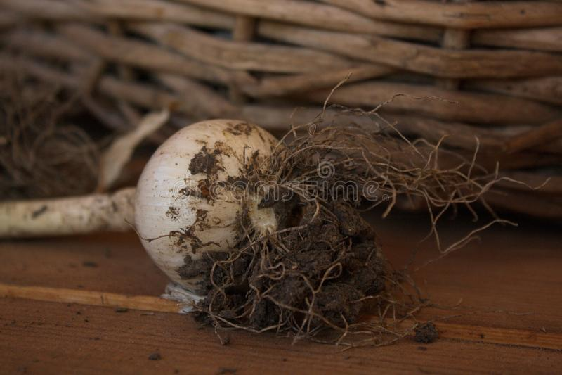 Bird Nest, Nest, Wood, Still Life Photography Free Public Domain Cc0 Image