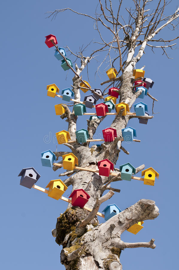 Free Bird Nest On A Tree Stock Photography - 26125272