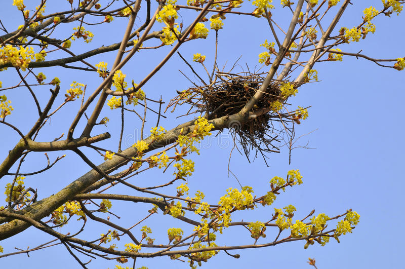 Bird nest in tree royalty free stock images