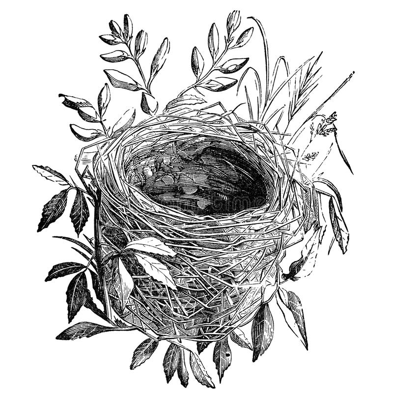 Bird nest vintage illustration stock illustration