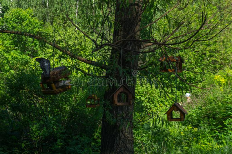 Bird nests hanging in the tree, pigeons resting royalty free stock images