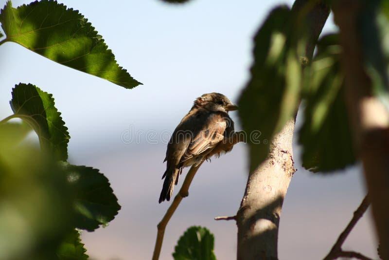 Bird. Nice bird on a tree bough stock image