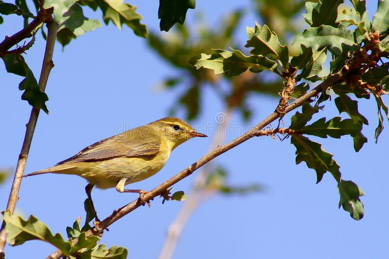 Bird. Nice bird on a tree bough royalty free stock images