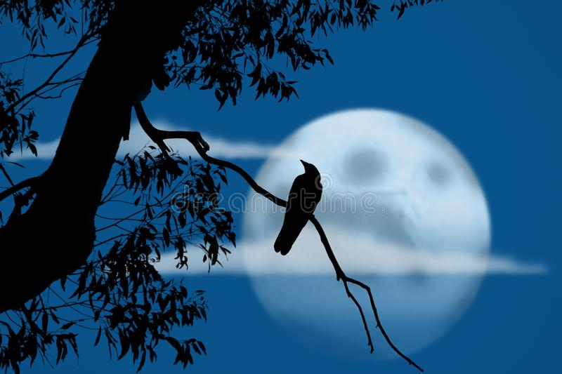 Bird at night in front of full moon. Silhouette of bird on a branch and tree in front of a full moon stock images