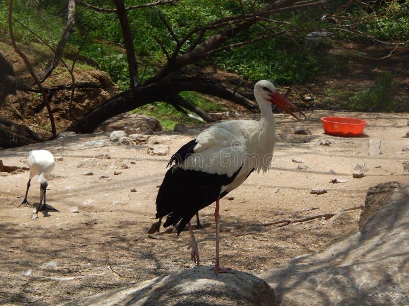 Bird3 noir et blanc photographie stock libre de droits