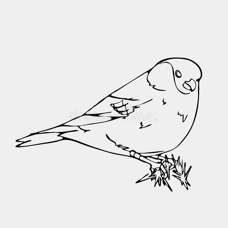 Hand-drawn pencil graphics, small bird. Engraving, stencil style. Bird, oriole, chickadee, sparrow, blackbird, nightingale, finch, bunting, hangbird, goldfinch vector illustration