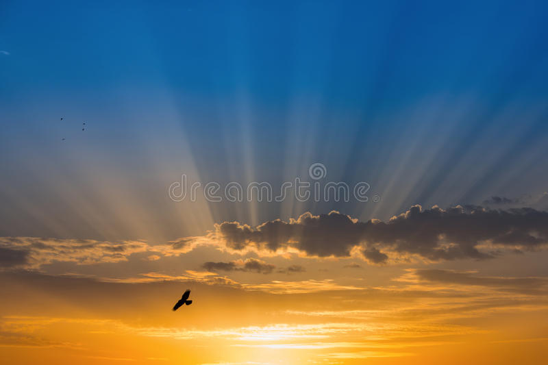 Bird over rays of light over blue sky.  royalty free stock photo
