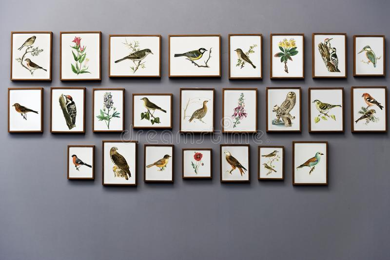 Bird Painting Wall royalty free stock photo