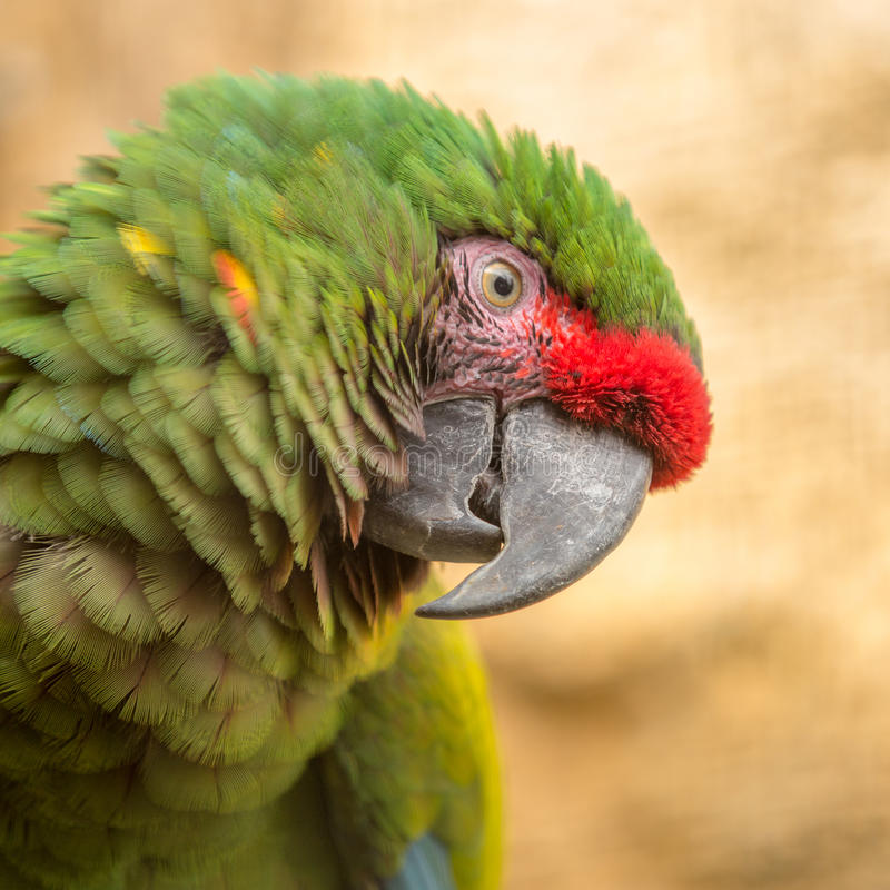 Bird papagayo head, texture, stock photos